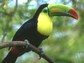 Tropical rainforest birds and animals