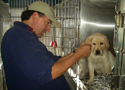 Mick (wearing a tan baseball hat) checks the ears of one of the puppies (a yellow Lab) on the Puppy Truck
