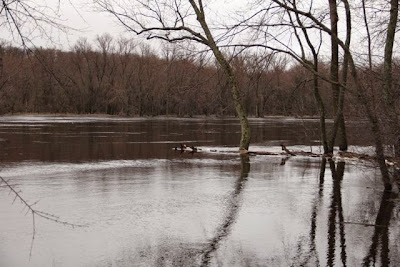 Spring high water, St. Croix River