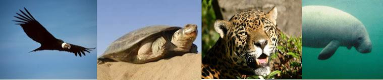 Extinción Animal en Territorio Venezolano