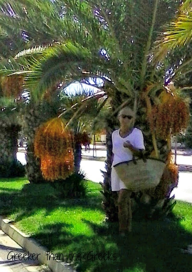 Palm trees with seed clusters