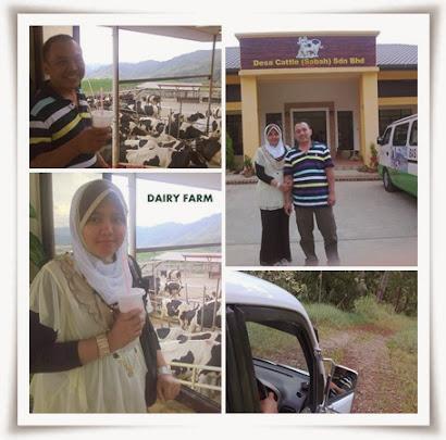 SABAH : @ MERSILAU DAIRY FARM