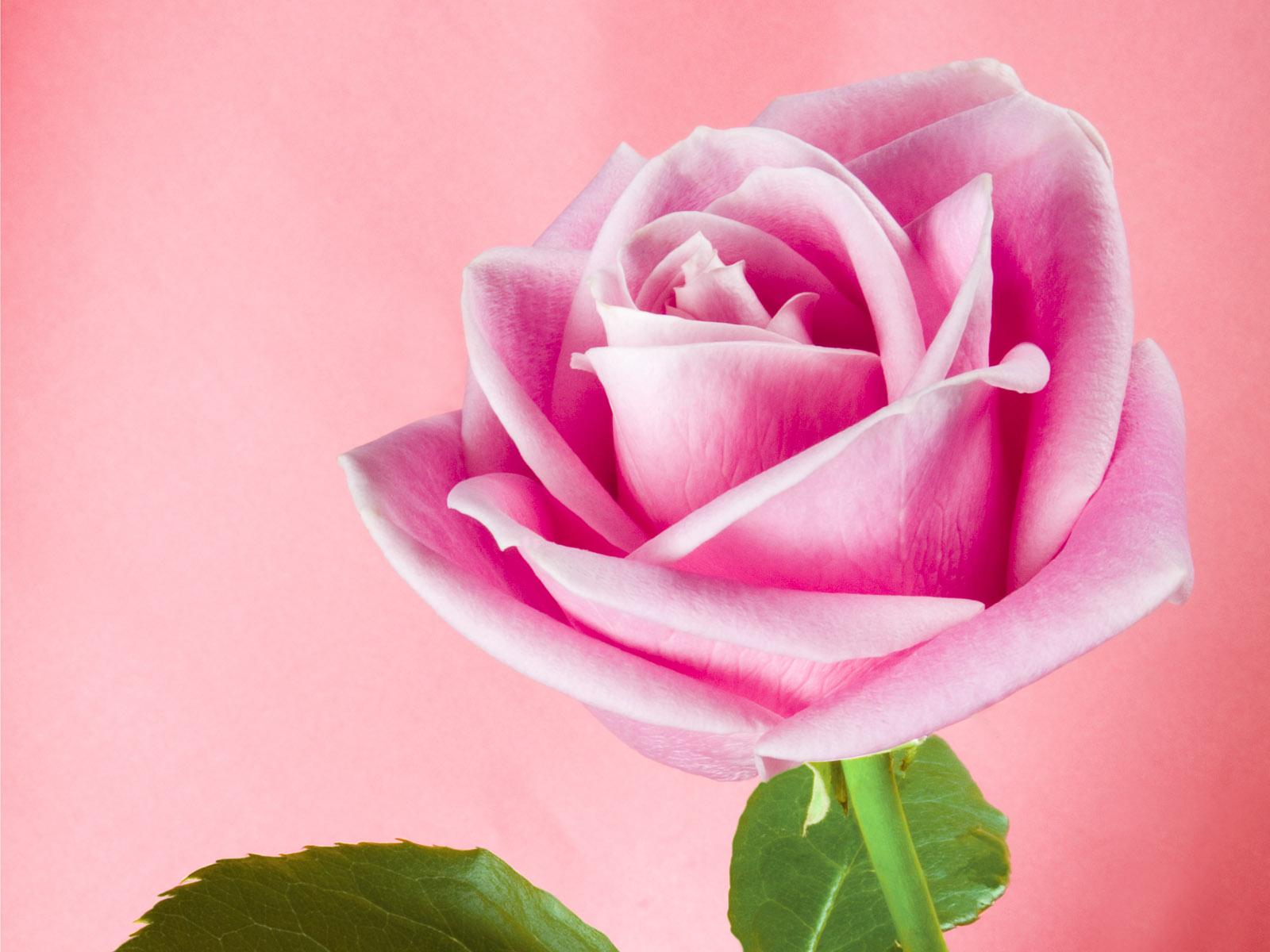 Tatouages Fleur Des photos et images de tatouages