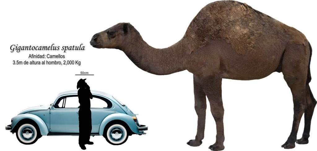 Los Animales Mas Grandes Del Mundo Taringa! - imagenes de el animal mas grande del mundo
