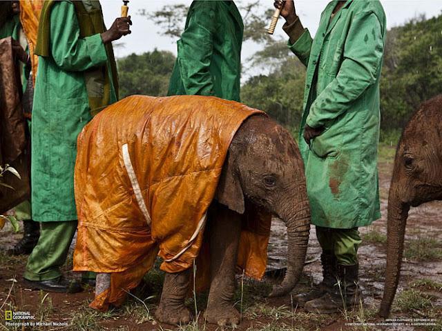 Лучшие фотографии начала 2012 года от National Geographic