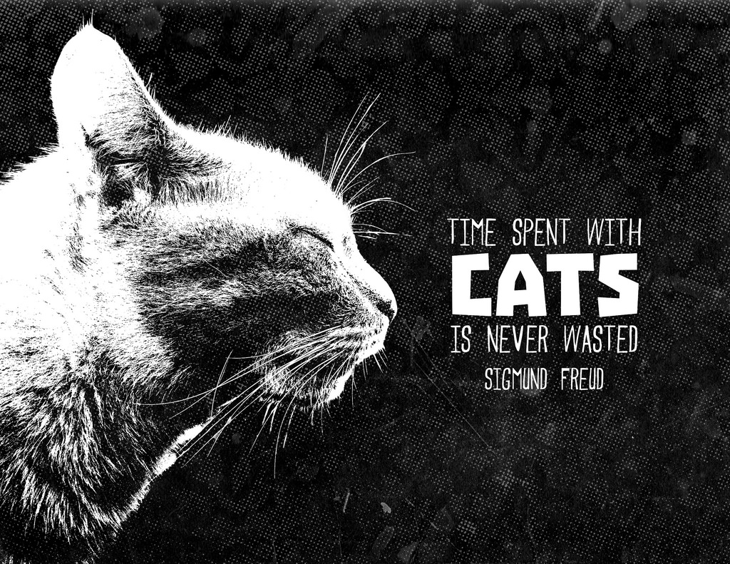 """""""Time spent with cats is never wasted Sigmund Freud """""""
