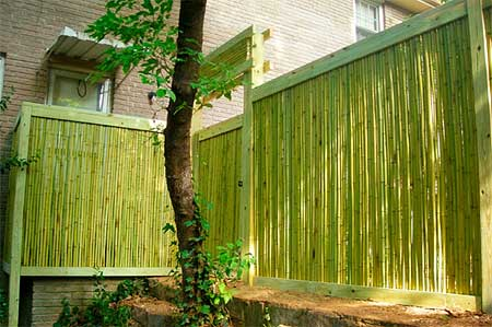 Concept of the backyard bamboo fence - Green fencing ideas ...