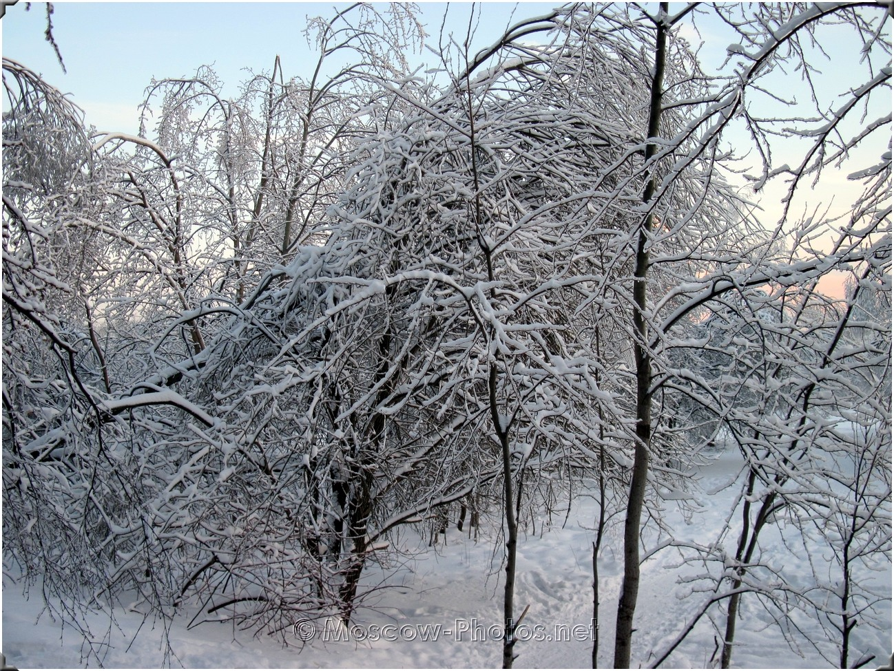 Winter In Moscow Wood