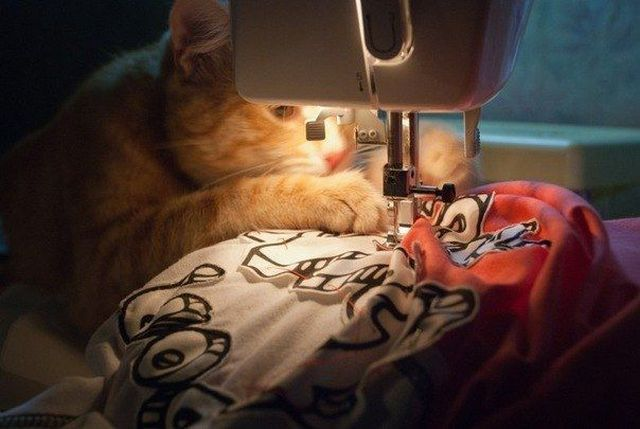 cat pictures, cat photos, sewing cat