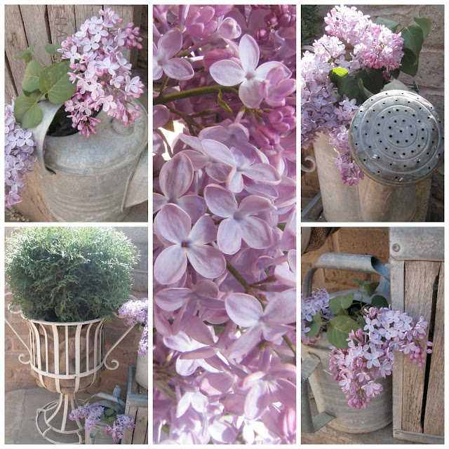 Cabin & Cottage, etc.: A Lilac Montage