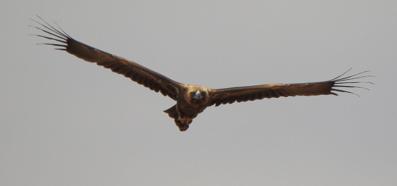 falcon chat