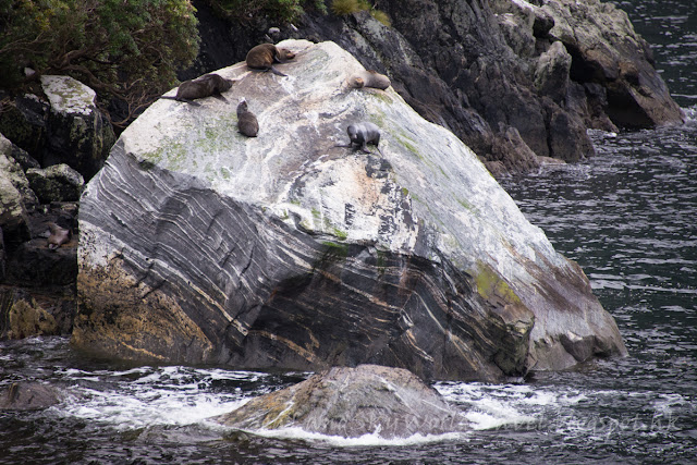 Milford Sound 米佛峽灣