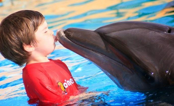 Dolphin-Kids