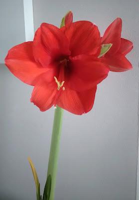 fleur, plante, bullelodie