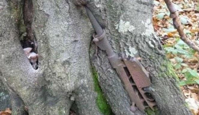 Pohon-pohon di Hutan Rusia 'Memakan' Senjata