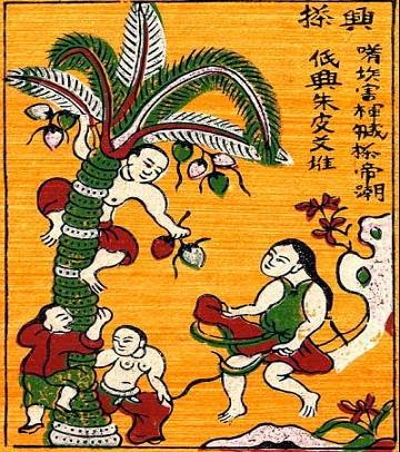 Bức tranh hứng dừa - Thuyết về cây dừa