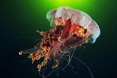 25 фото океанской красоты