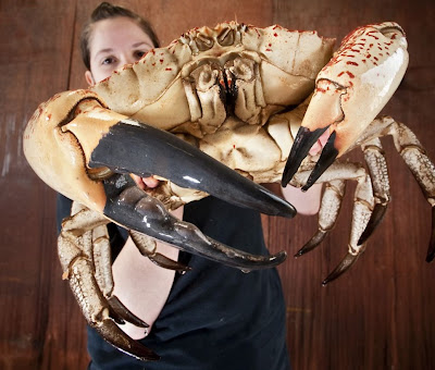 biggest, largest, giant crab of the world