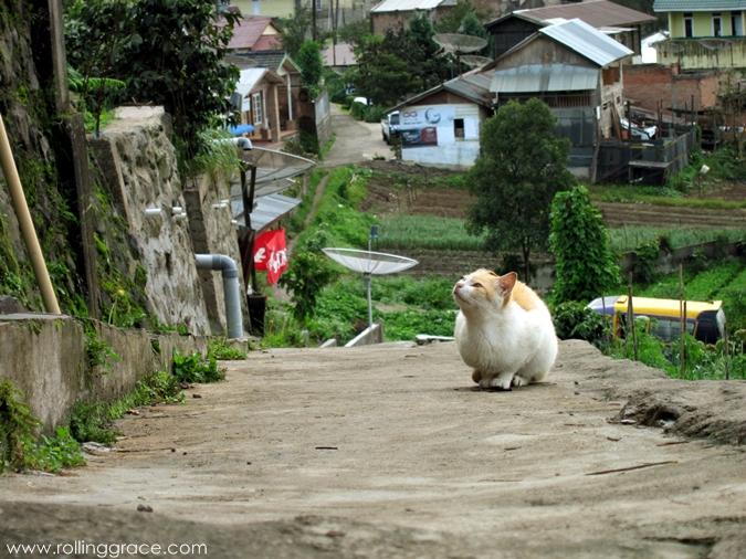 popular places in indonesia