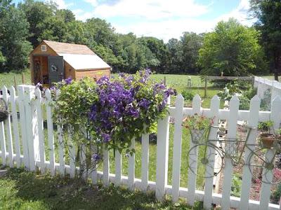 Pam 39 s english cottage garden vines for vertical interest for Kitchen garden fence