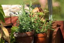 Växthus-lycka