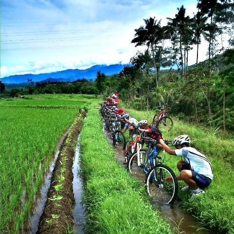 Sepeda di Sawah