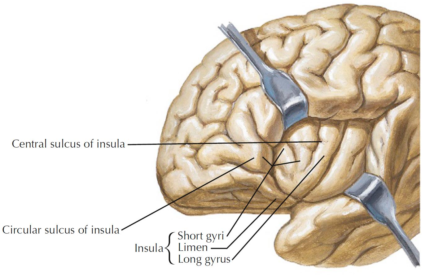 Shark Brain Diagram - Schematics Wiring Diagrams •