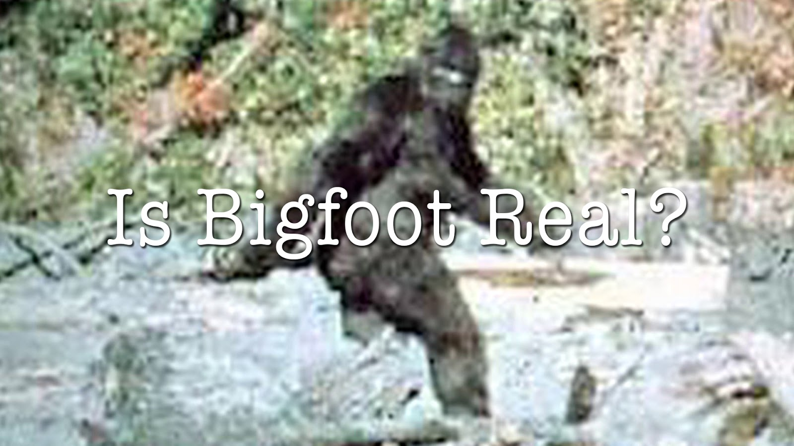 an argument in favor of existence of big foot yeti and sasquatch North america has its own monster while scotland has its loch ness sea serpent and the himalayas has its abominable snowman or yeti, north america lays claim to sasquatch or, as he has been nicknamed, bigfoot sasquatch - a 7- to 8-foot-tall man/ape - has been sighted in north america for centuries .