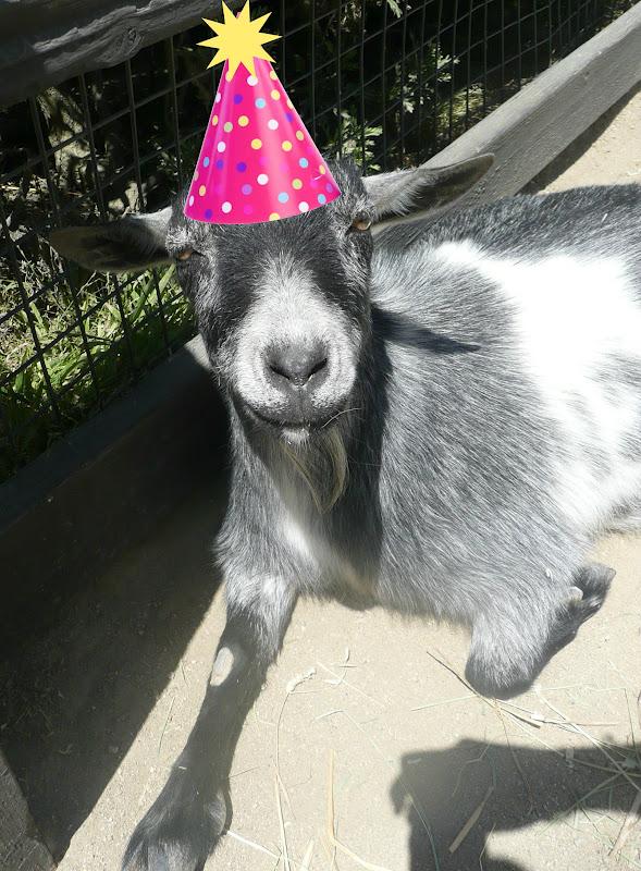 Happy birthday goat - photo#28