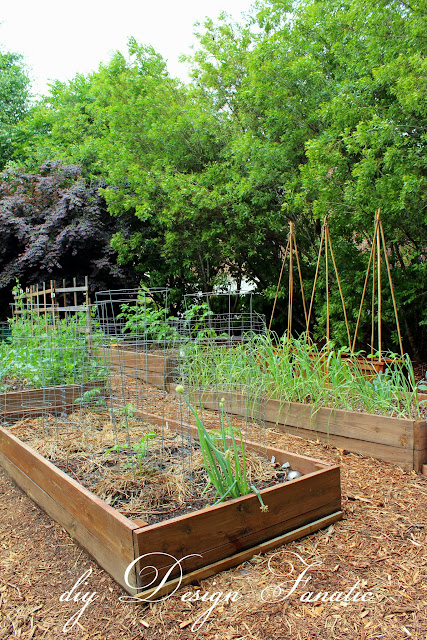 raised beds, raised bed garden, vegetable garden