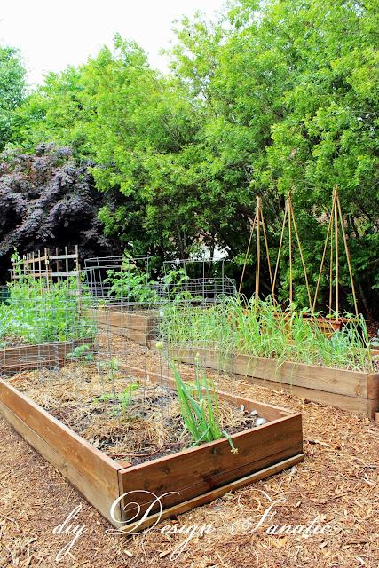 raised beds, raised bed garden, vegetable garden