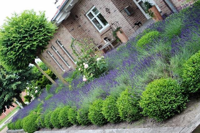 vorgarten mit lavendel – bankroute, Garten und bauen