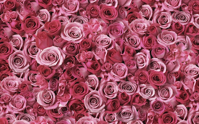 Hundreds Of Pink Roses HD Wallpaper