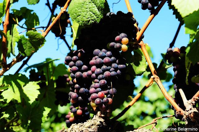 Cottonwood Canyon Wine Grapes Santa Maria Wine Tasting Central Coast