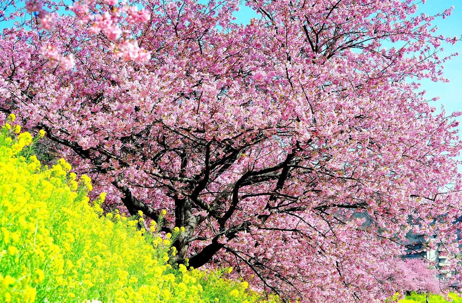 beautiful spring trees wallpaper - photo #35
