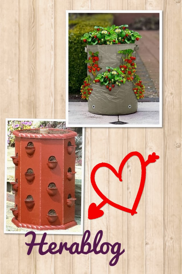 Herablog arriva la primavera prepariamoci a piantare le for Vasi per fragole