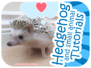 Hedgehog and Small Animal Tutorials