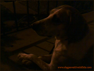 Picture of my dog Valentino sitting on the front porch at night.