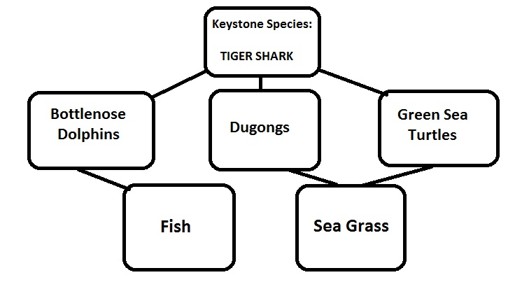 Shark Finning and its Impacts on Shark Populations and Survival ...
