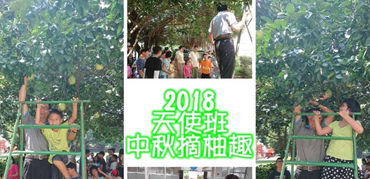 2018天使班中秋摘柚趣