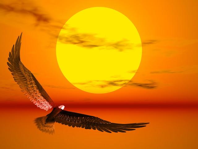 كن مبدعا مع الصور الظليلة للطيور