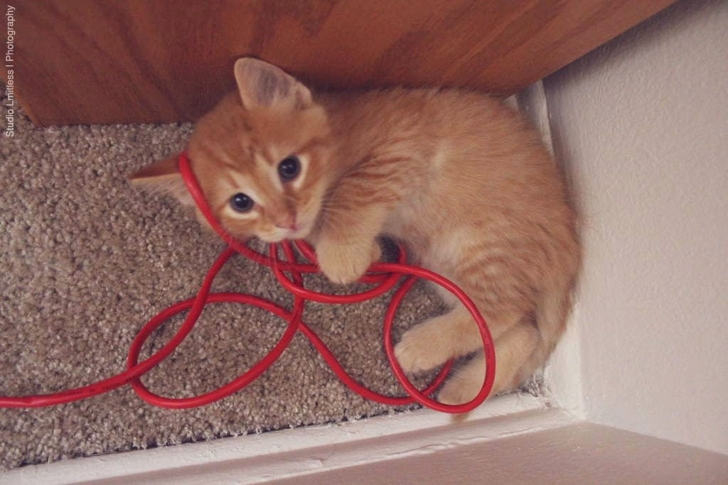 Funny cats - part 95 (40 pics + 10 gifs), cat pictures, kitten playing with red cable