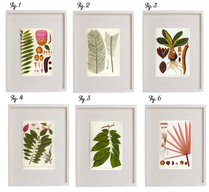 Free download botanical prints poppytalk - Cuadros posters laminas ...
