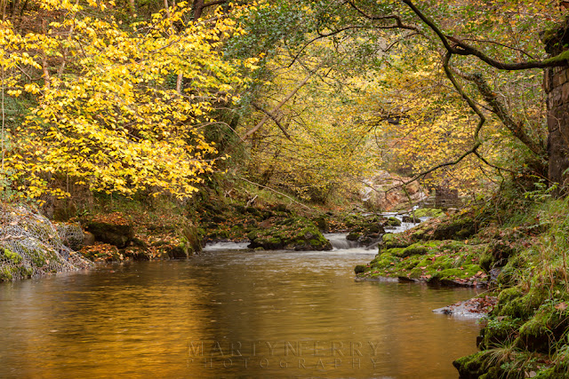 Golden autumn leaves on the Afon Mellte in South Wales by Martyn Ferry Photography