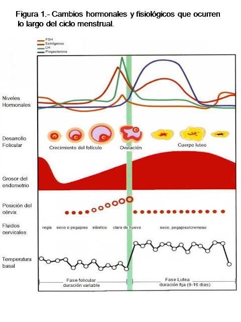 Cambios hormonales y fisiológicos del ciclo menstrual