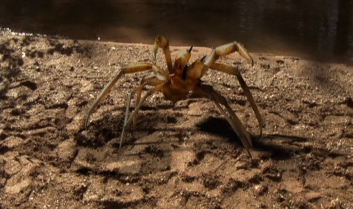 camel spider essay Buying a camel spider (solifugae) scientific papers and new discoveries buying, camel, canada.