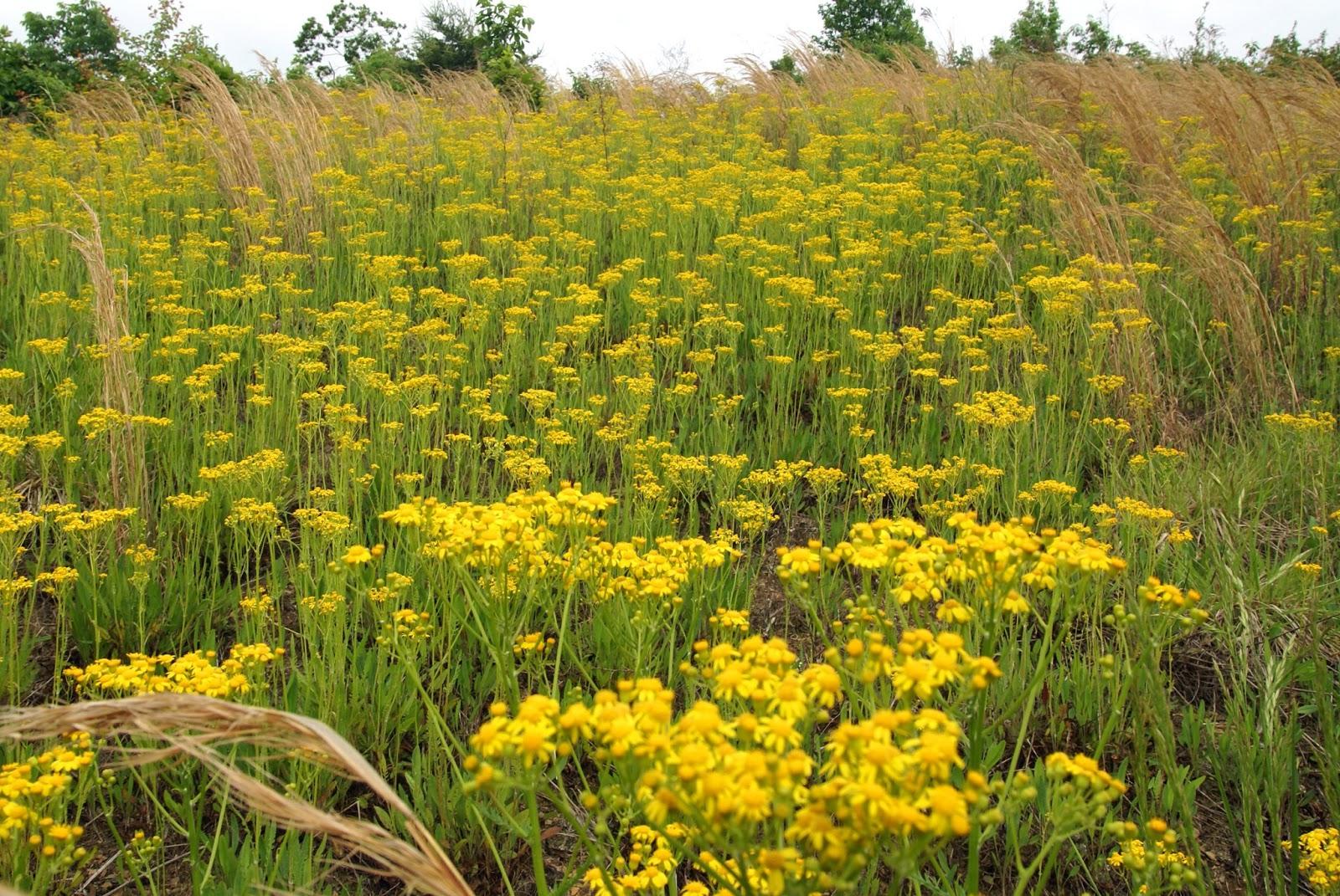 Eeyores Ramblins Weed Or Flower Roundup Or Fertilizer