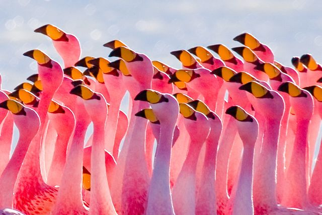 Астаксантин (король антиоксидантов): сила розового и секрет фламинго