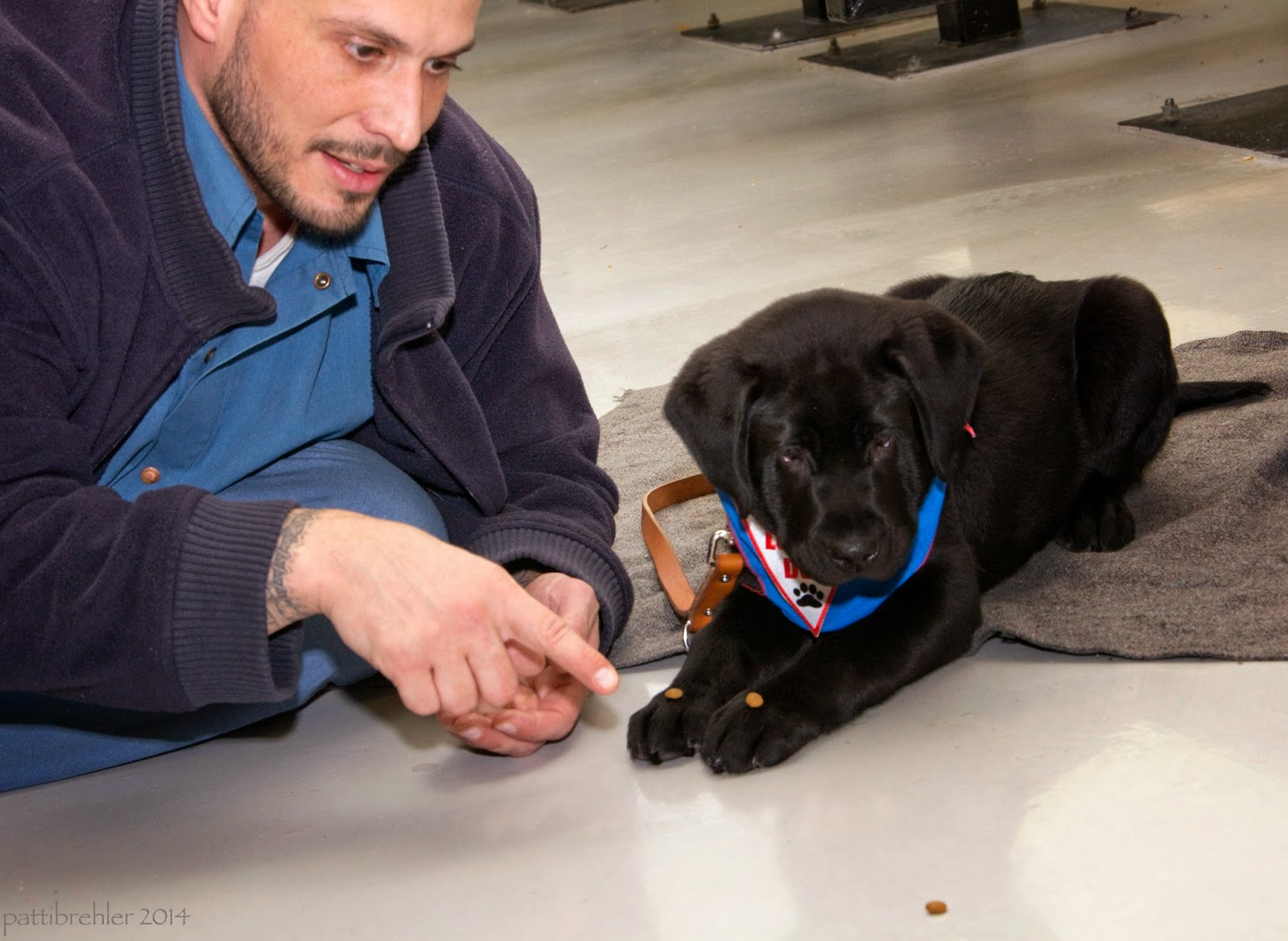 A man dressed in a royal blue shirt and a darker blue fleece jacket is sprawled out on a white tile floor on the left side of the picture. A young black lab puppy is lying next to him facing the camera. The puppy has a bit of kibble on each of his front paws which are stretched out in front of him. The puppy is on a grey mat. The man is pointing to the puppy's paws with his right hand. About a foot in front of hte puppy on the floor is another piece of kibble. The puppy is staring at the kibble on the floor, but not moving a muscle.