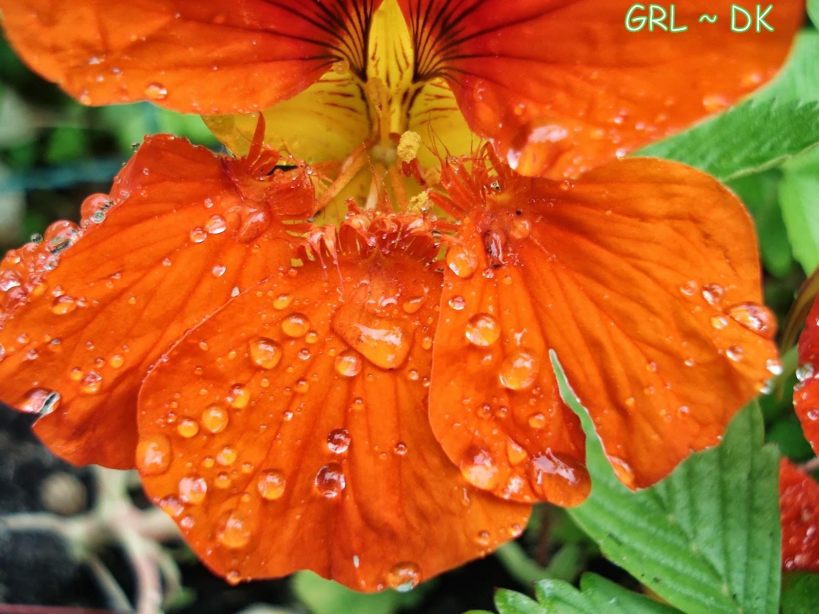 billeder af blomster